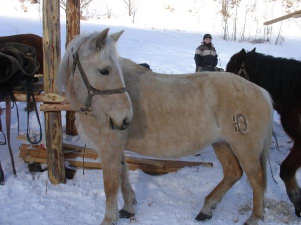 Фотогалерея: На конях в Сугойне. 2019г.