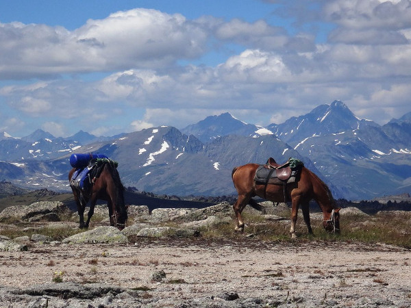 Фотогалерея: За хариусом на лошадях. Лето 2018