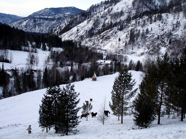 Фотогалерея: Зимнее солнце Алтая (конный).Зима 2018